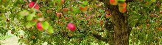 Растения для сада и огорода со скидкой до 25%. Москва, Одинцово