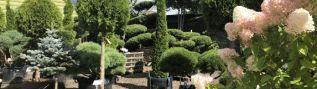 Растения со скидкой в Садовом центре Gardens 10%. Москва, Одинцовский район, поселок «Лесной Городок»